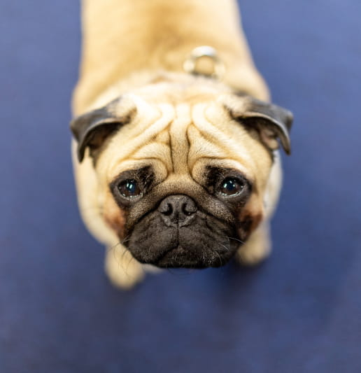 Image of a cute dog